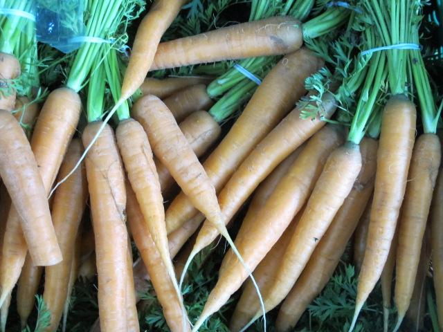 Bio Bundmöhren / Möhren / Karotten, neue Ernte
