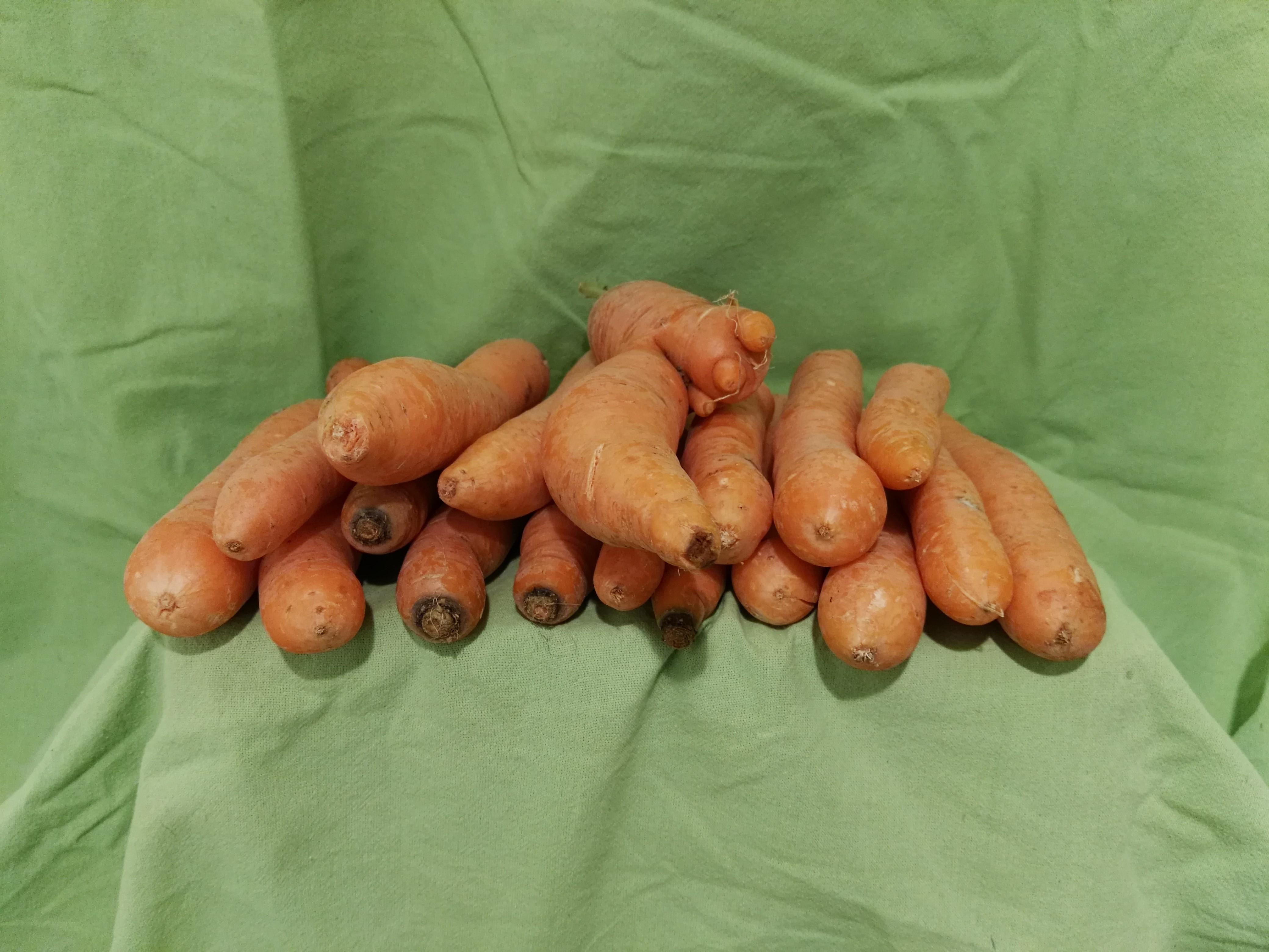 Bio Möhren / Karotten